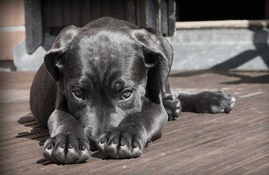 Trauriger Hund auf Terrasse