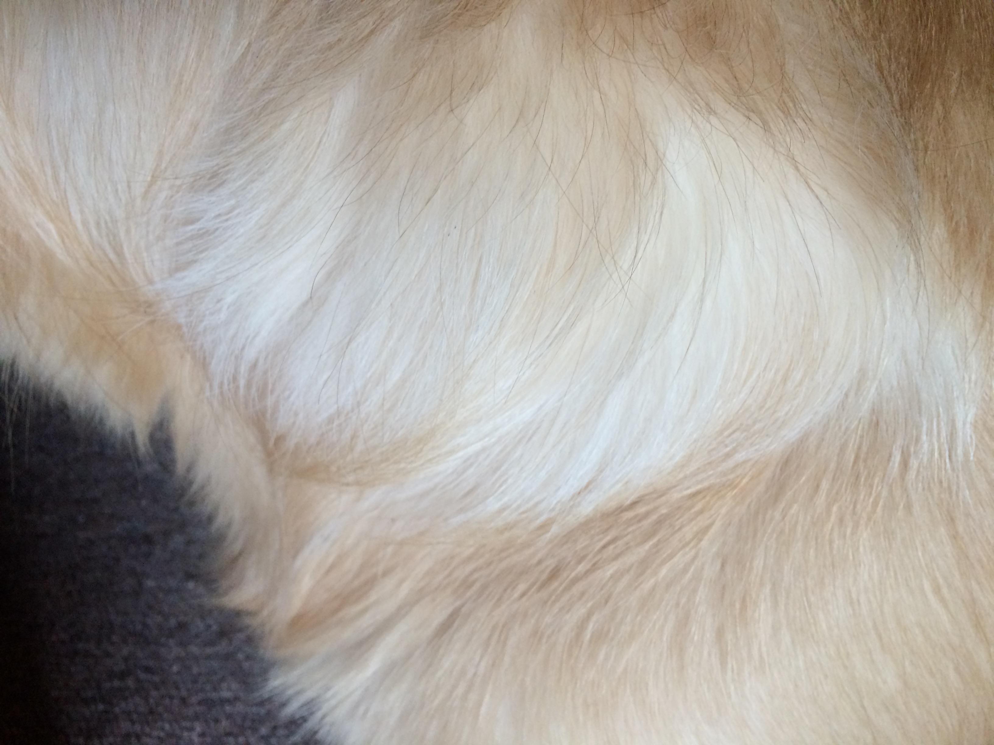Die Anatomie des Hundes: Körperbau im Querschnitt • Couchdogs