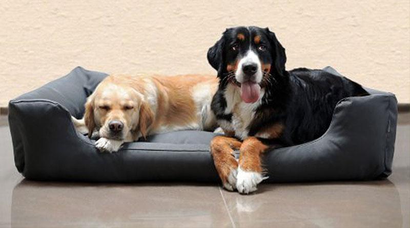 Schöne Hundebetten hundebetten tipps das solltet ihr vor dem kauf wissen