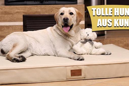Beste Hundematratzen