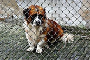 Hund-im-Tierheim-traurig