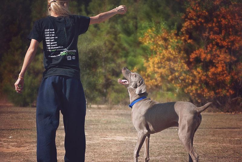 Training mit dem Hund