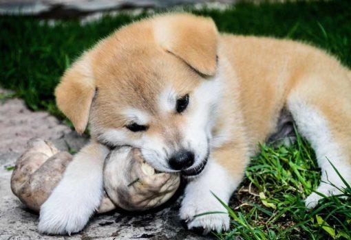 Hund Futter aggressiv