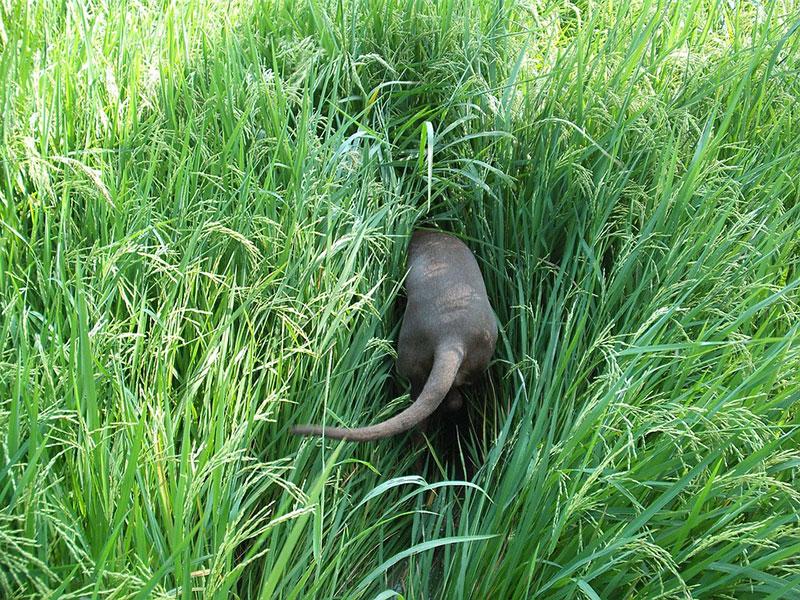 Hund spielt im hohen Gras