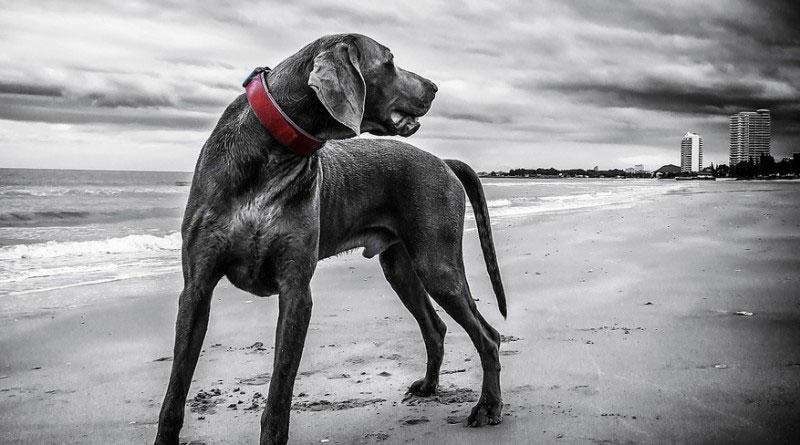 Hund Trick beibringen Dreh Dich
