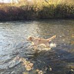 Marley und das Wasser