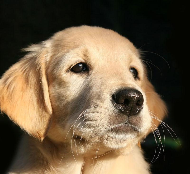 Hund Vom Z Chter Ja Oder Nein Couchdogs