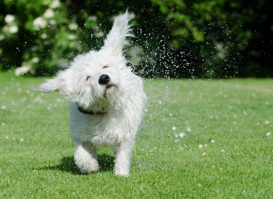 Dog shaked