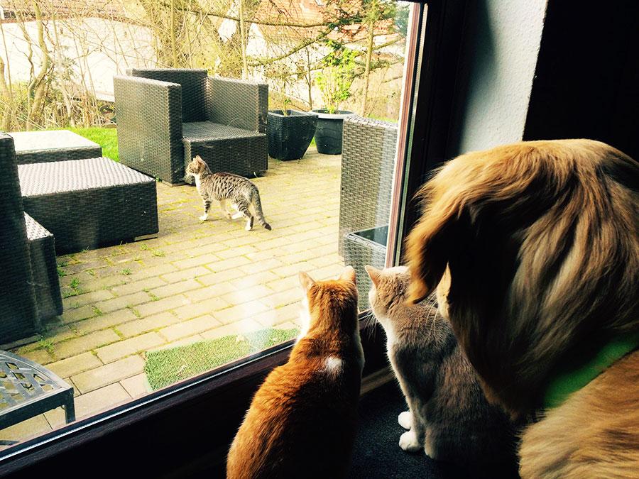 Marley entdeckt eine kleine Katze