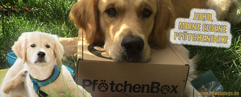 Hunde Geschenkebox