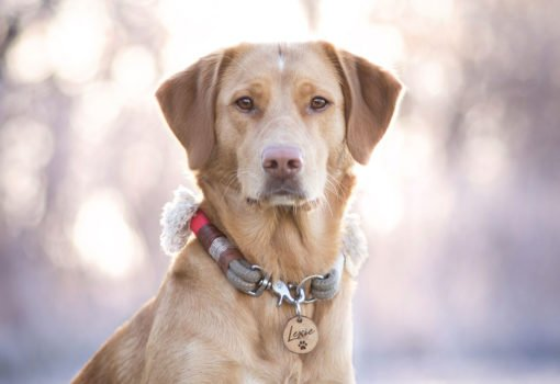 Hundemarke an Golden Paw Halsband BELLA