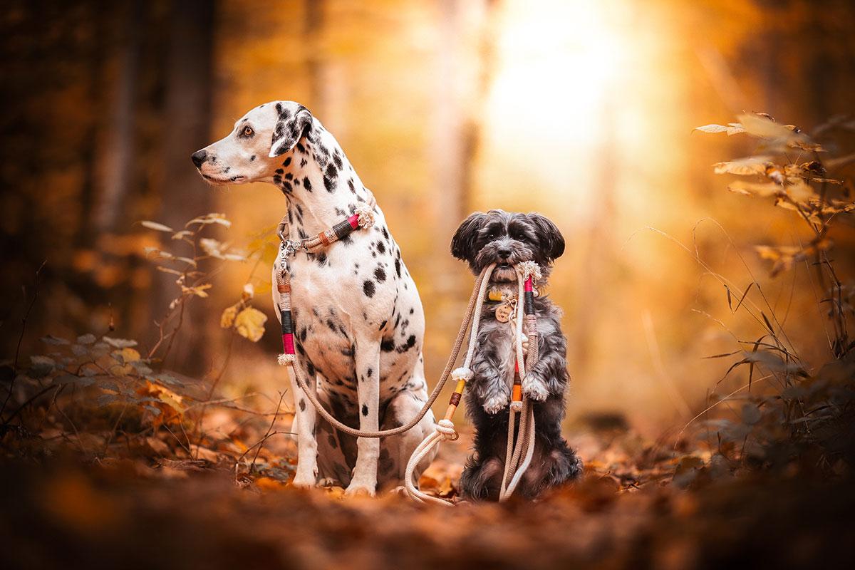 Natürliche Hundeleinen und Halsbänder