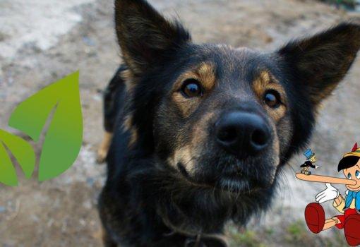 Hunde Kotbeutel biologisch abbaubar