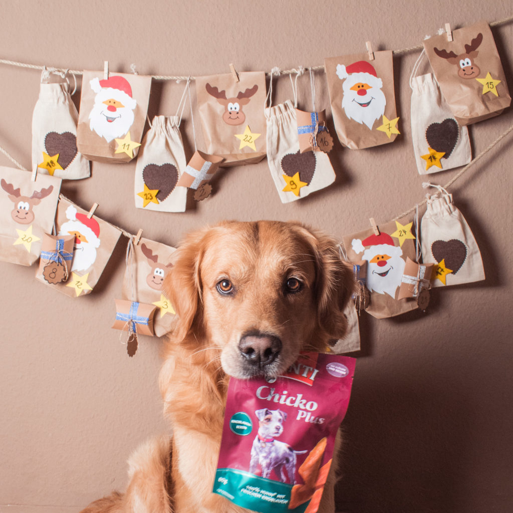 Hunde Adventskalender selber basteln