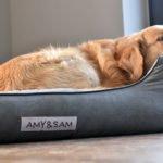 Hundebett Amy und Sam Test
